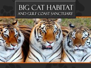 Big Cat Habitat